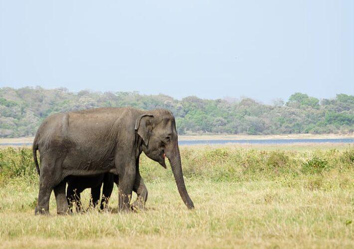 Sri Lanka Trip – Day 1